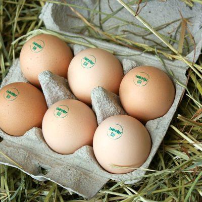 Demeter Eier