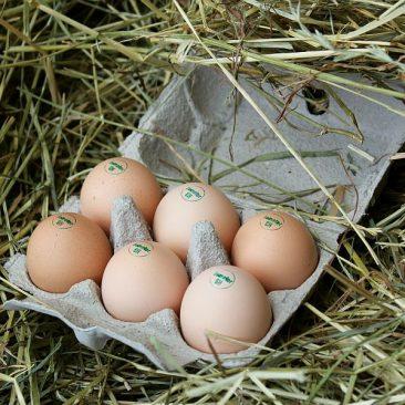 Eier und Geflügel