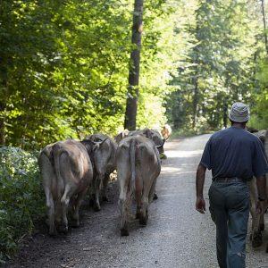 Der Weg zur hinteren Tagesweide führt durch den Wald