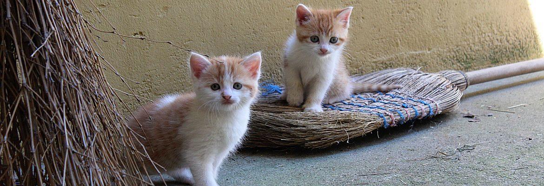 Katzenbesen