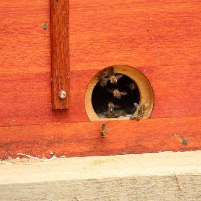 Eingang zum Bienenkasten