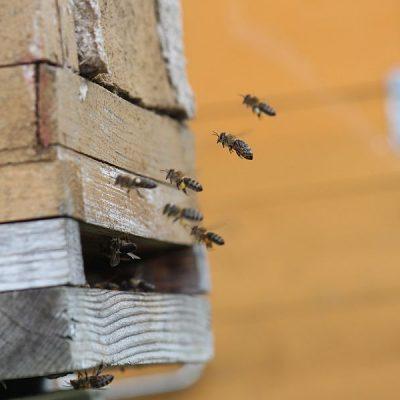 Älterer Bienenkasten