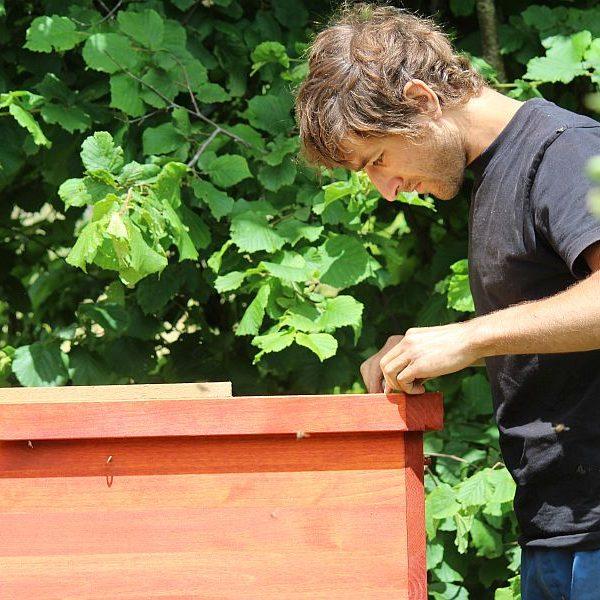 Henrik, 3. Lehrjahr Biodynamische Fachausbildung, kontrolliert die Bienenkisten