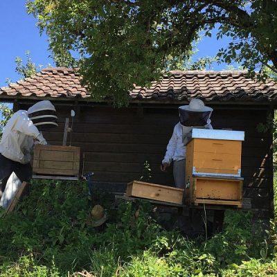 Durchschauen der Bienenkästen