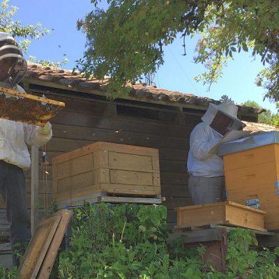 Bewertung der Bienengesundheit