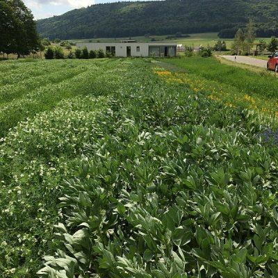 Getreidezüchtung Peter Kunz - Versuchsfeld auf unserem Land