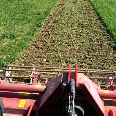 Wiesenumbruch, flache Bodenbearbeitung