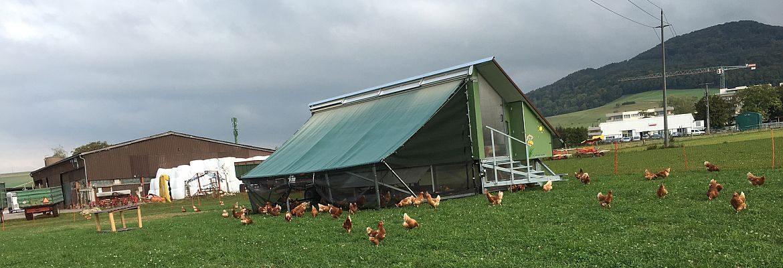 Hühnerhotel Hof  am Stei