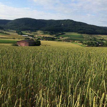 Hofladen-Angebote & Thema Bodenfruchtbarkeit